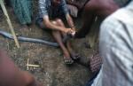 Dennis Shearing Skinning  a King Cobra