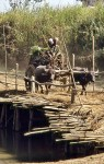 Oxcart with sugarcane